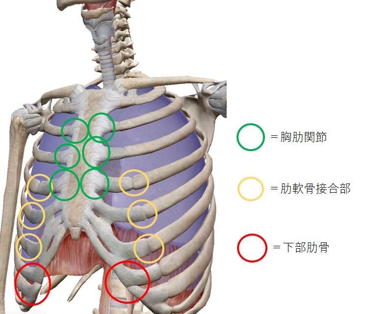 痛い 横隔膜