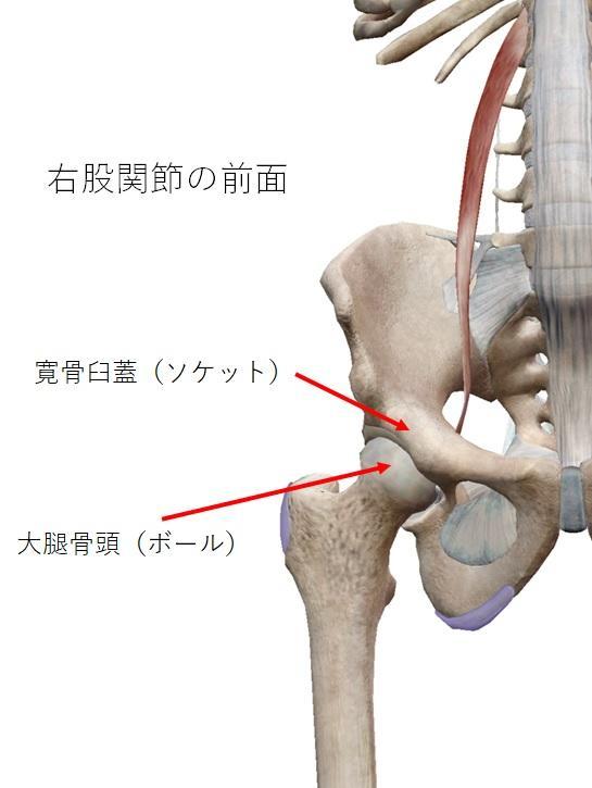 股関節 左 だけ 痛い 原因